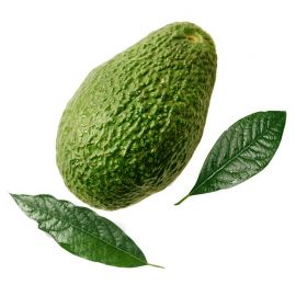 Avocado Shalimar( Kenya)