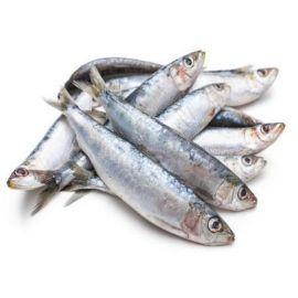 Sardine (Big) - 1 Kg