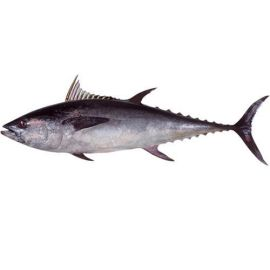 Tuna black (Choora) - 1 Kg