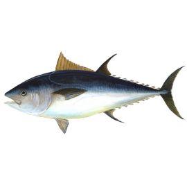Tuna White (Choora) - 1Kg
